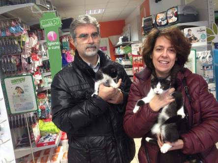gattini adottati